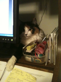 My cat Folly watching me write.